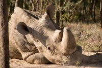 Фото: Helping Rhinos