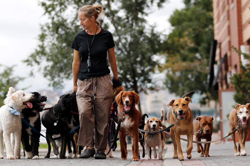 finding dogs Download an application & contract an application is the best way to find out more about potential adopters having someone fill out an application shows that you are serious about placing the dog in a good home.